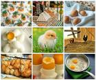 Collage of hen egg
