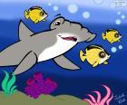Hammerhead shark, Julieta Vitali