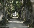 Large trees, Brazil