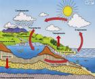 The water cycle (es)
