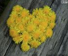 Heart formed by dandelion