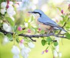 Sky blue bird