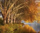 Trees by the lake in autumn