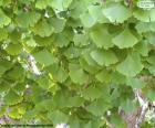 Ginkgo biloba leaves puzzle