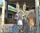 Donkey heads and pony