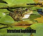 International Amphibian Day