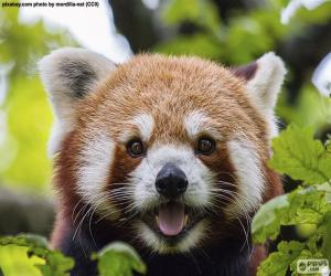 Red panda face puzzle