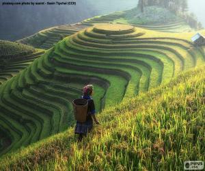 Rice Terraces, Thailand puzzle