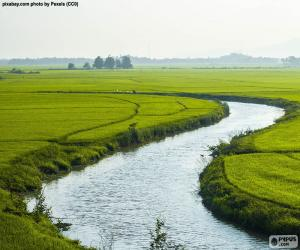 River between rice fields puzzle