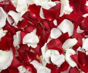 Rose petals puzzle
