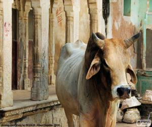 Sacred cow, India puzzle