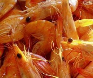 Salted shrimp puzzle