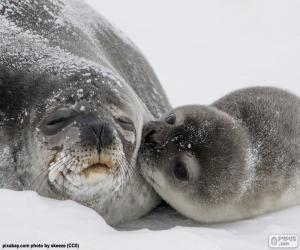 Seal and her pup puzzle