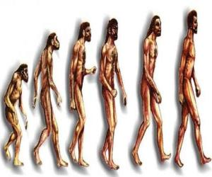 Sequence of human evolution from australopithecus Lucy to modern man passing among others by men of Heidelberg, Beijing, Neanderthal and Cromagnon puzzle