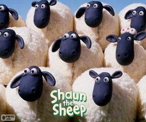 Sheep of the flock of Shaun puzzle