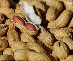 Shell peanuts puzzle