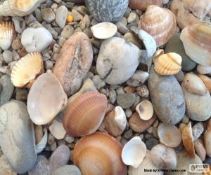 Shells and stones sea puzzle
