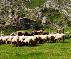 Shepherd tending his flock puzzle