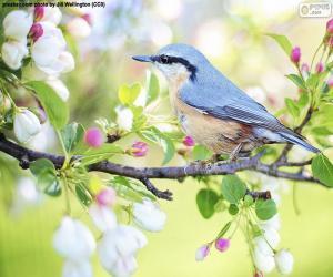 Sky blue bird puzzle