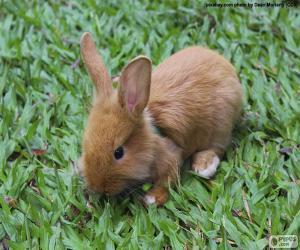 Small Bunny puzzle