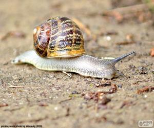Snail on the ground puzzle