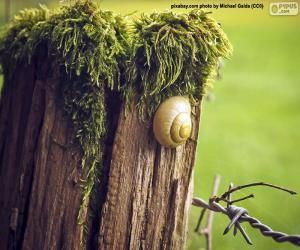 Snail puzzle