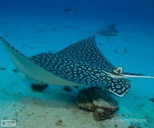 Spotted eagle ray puzzle