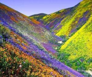 Spring landscape puzzle