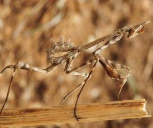 Stick insect puzzle