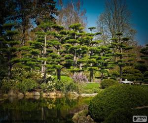 Sugi or Japanese cedar puzzle