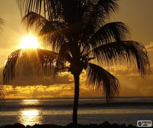 Sunset, Palm puzzle