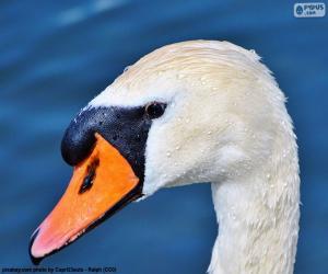 Swan Head puzzle