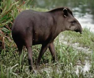Tapir puzzle