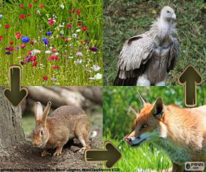 Terrestrial food chain puzzle