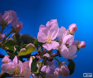 The apple tree flowers puzzle