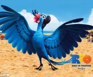 The beautiful Jewel is a female macaw in the movie Rio puzzle