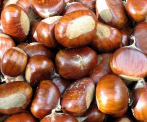The chestnut, the fruit of the chestnut tree puzzle