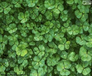 The clover panta puzzle