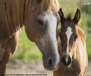 The face of a mare and a colt puzzle