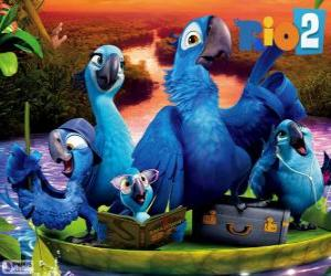 The family of Blu in the Amazon puzzle