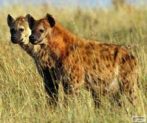 The hyenas or Hyaenas puzzle