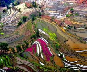 The terraces of Yunnan, China puzzle