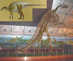 The Zhuchengosaurus is one of the largest known hadrosaurids puzzle