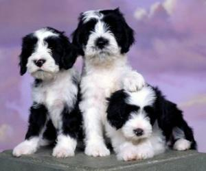 Three beautiful puppies puzzle