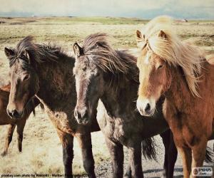 Three Icelandic horses puzzle