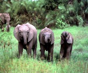 three small elephants puzzle