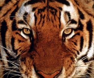 Tiger head puzzle