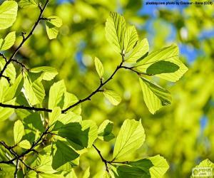 Tree leaves puzzle