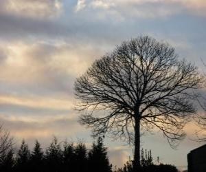 Tree without leaves in winter puzzle
