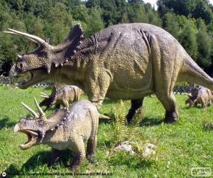 Triceratops puzzle